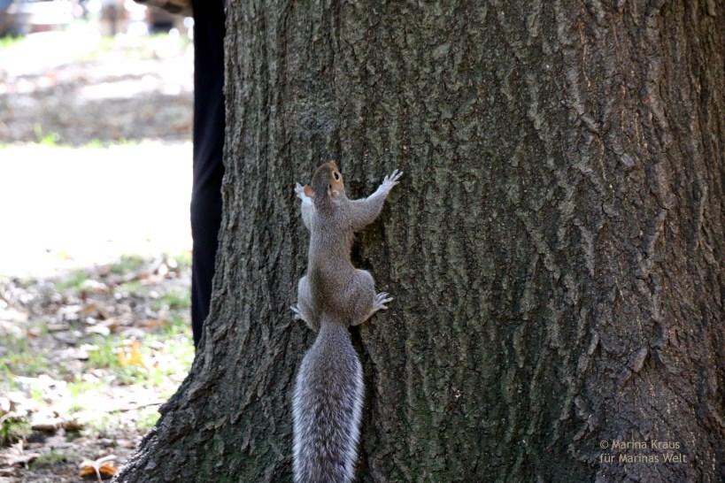 Eichhörnchen_Washington Square Park_02
