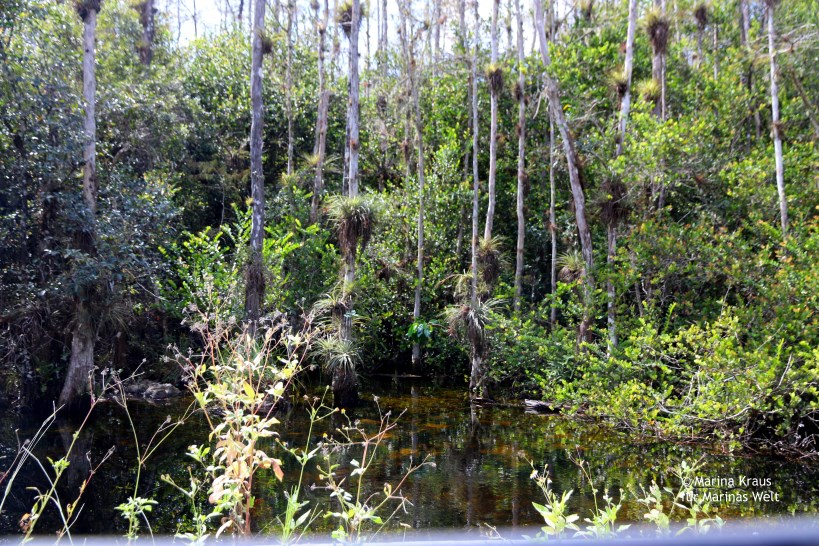 Big Cypress National Park_01