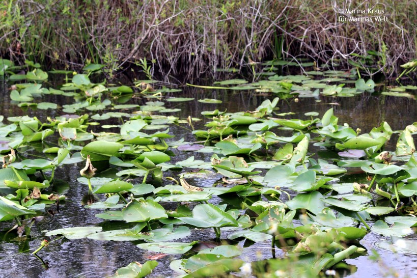 Everglades_02