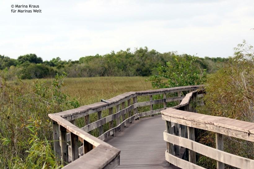 Everglades_03