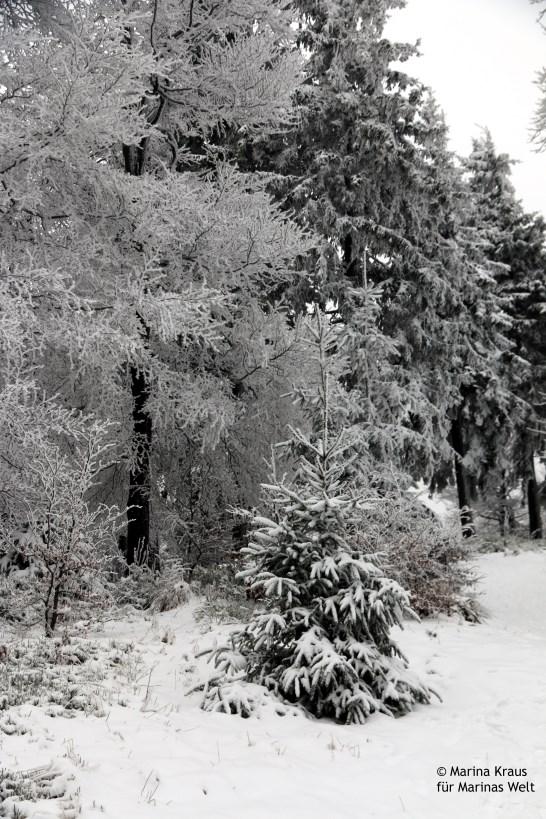 Winterbilder_05