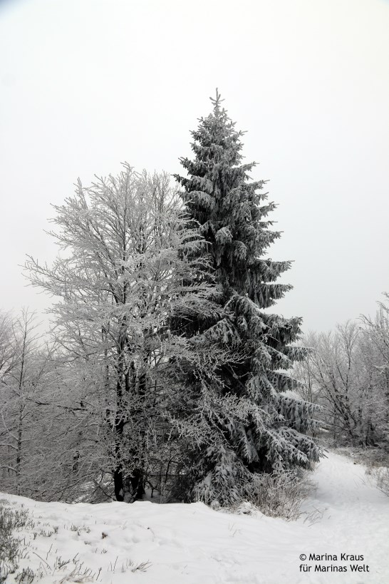 Winterbilder_06