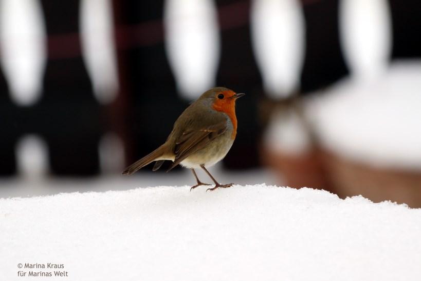 Winterbilder_08