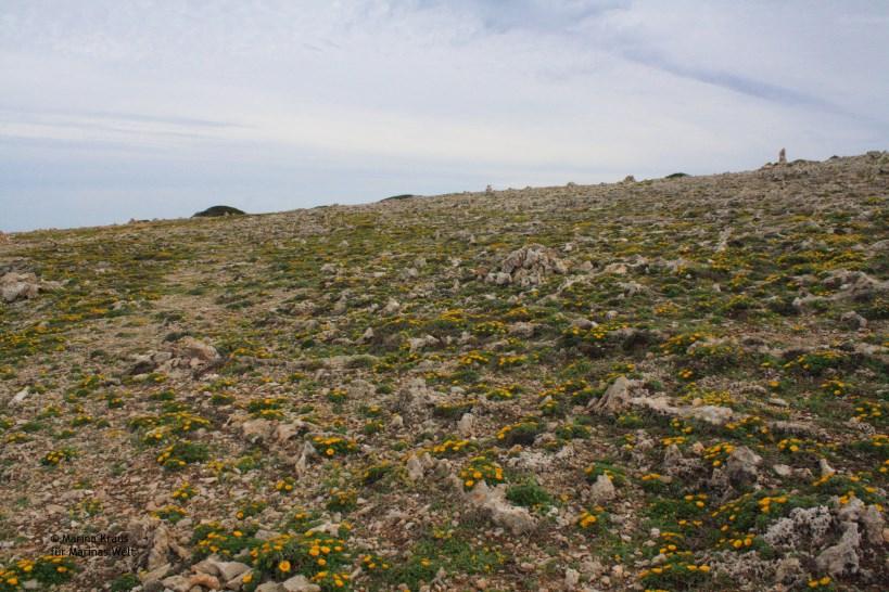 Punta de n'Amer_04