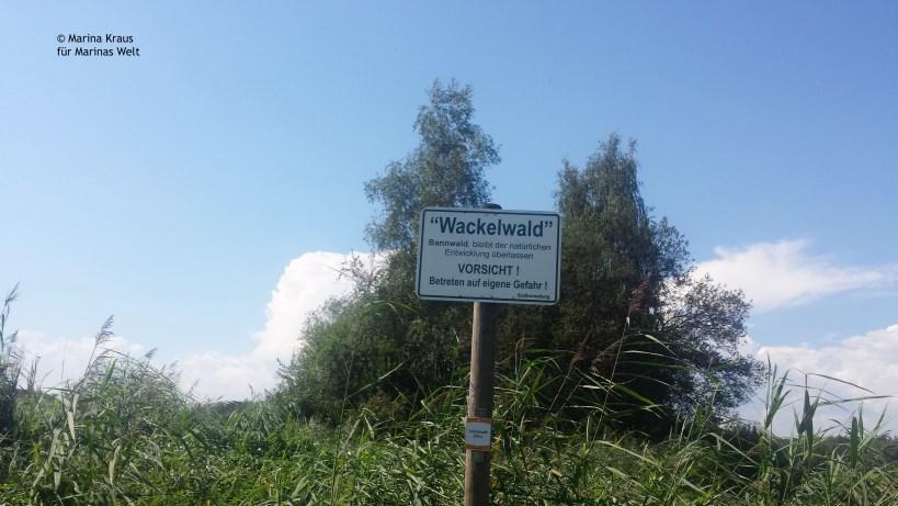 Federsee_Wackelwald_01